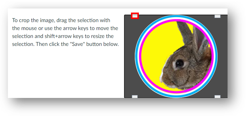 The rectangular handle used to resize a profile image selection